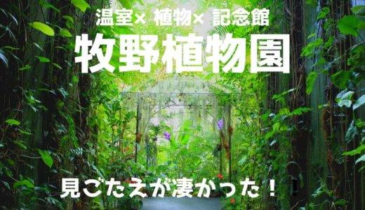 牧野植物園は見ごたえあり!植物と牧野富太郎の魅力で溢れていた!体験レポート