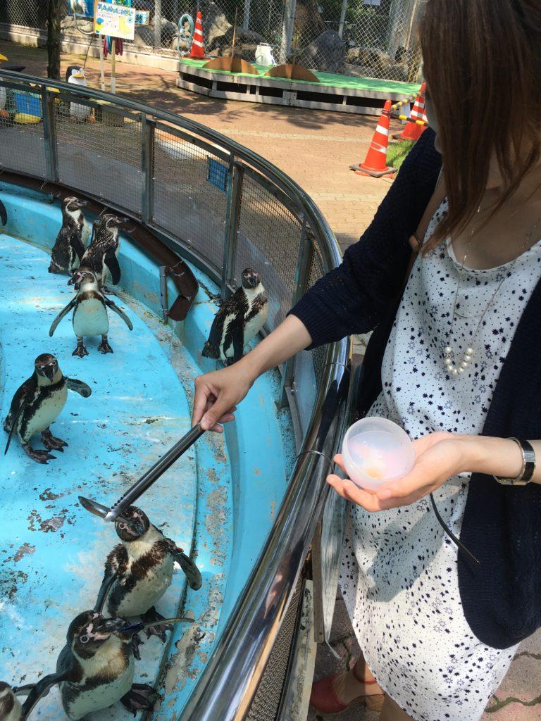 桂浜水族館:ペンギンのえさやり