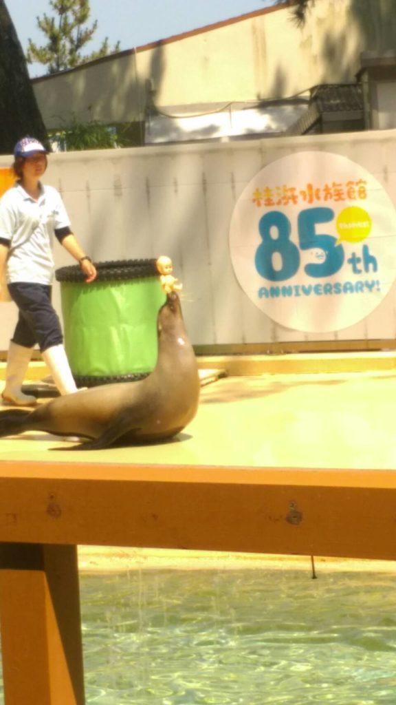 桂浜水族館:アシカショー