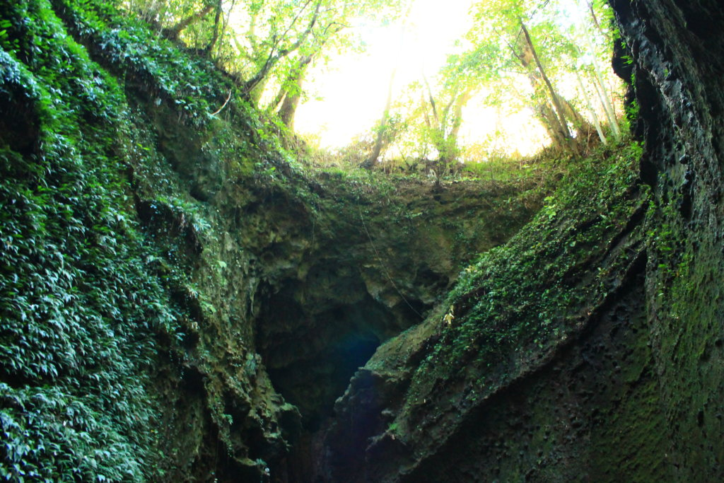伊尾木洞の上を見たときの風景