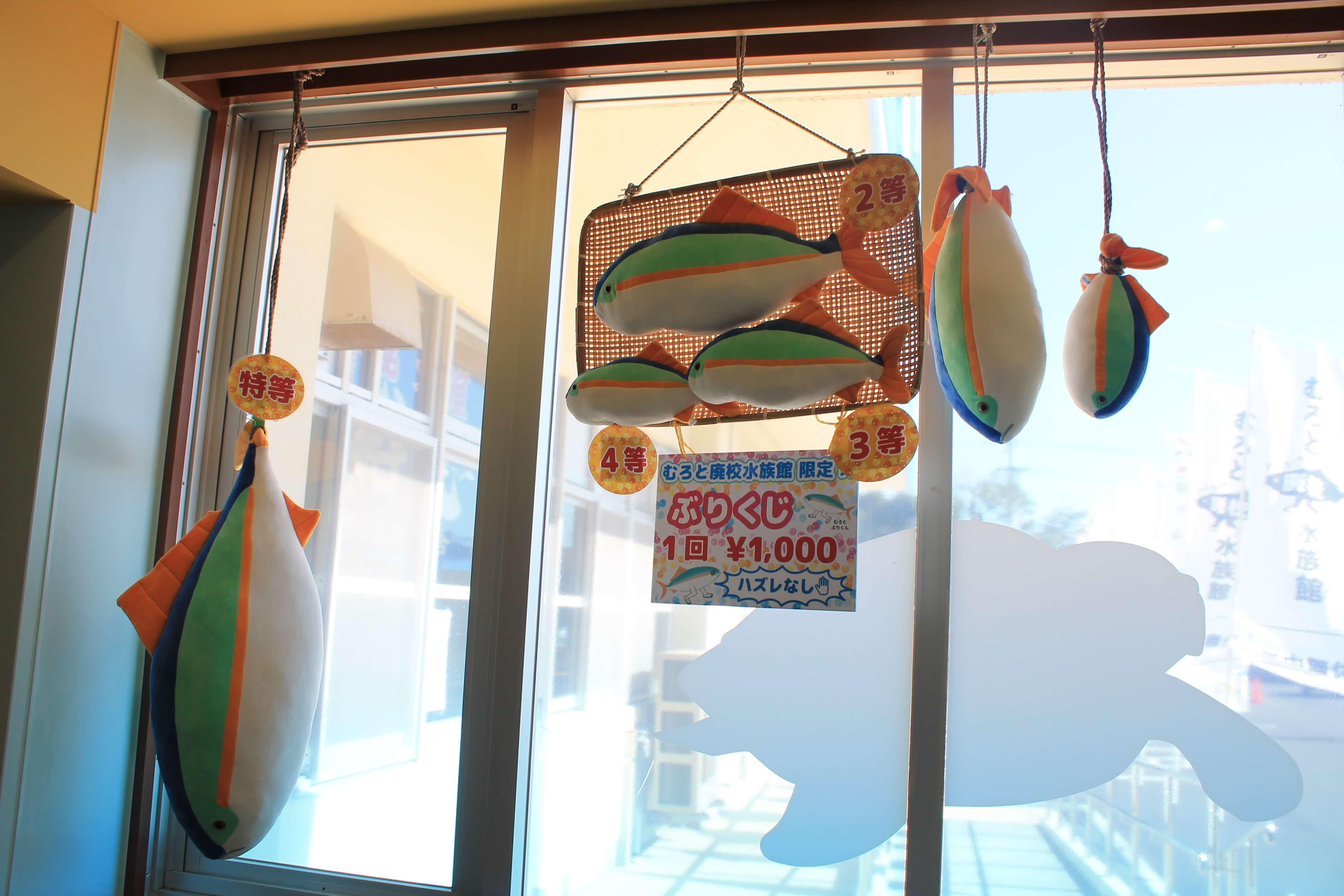 むろと廃校水族館:ブリくじのご様子