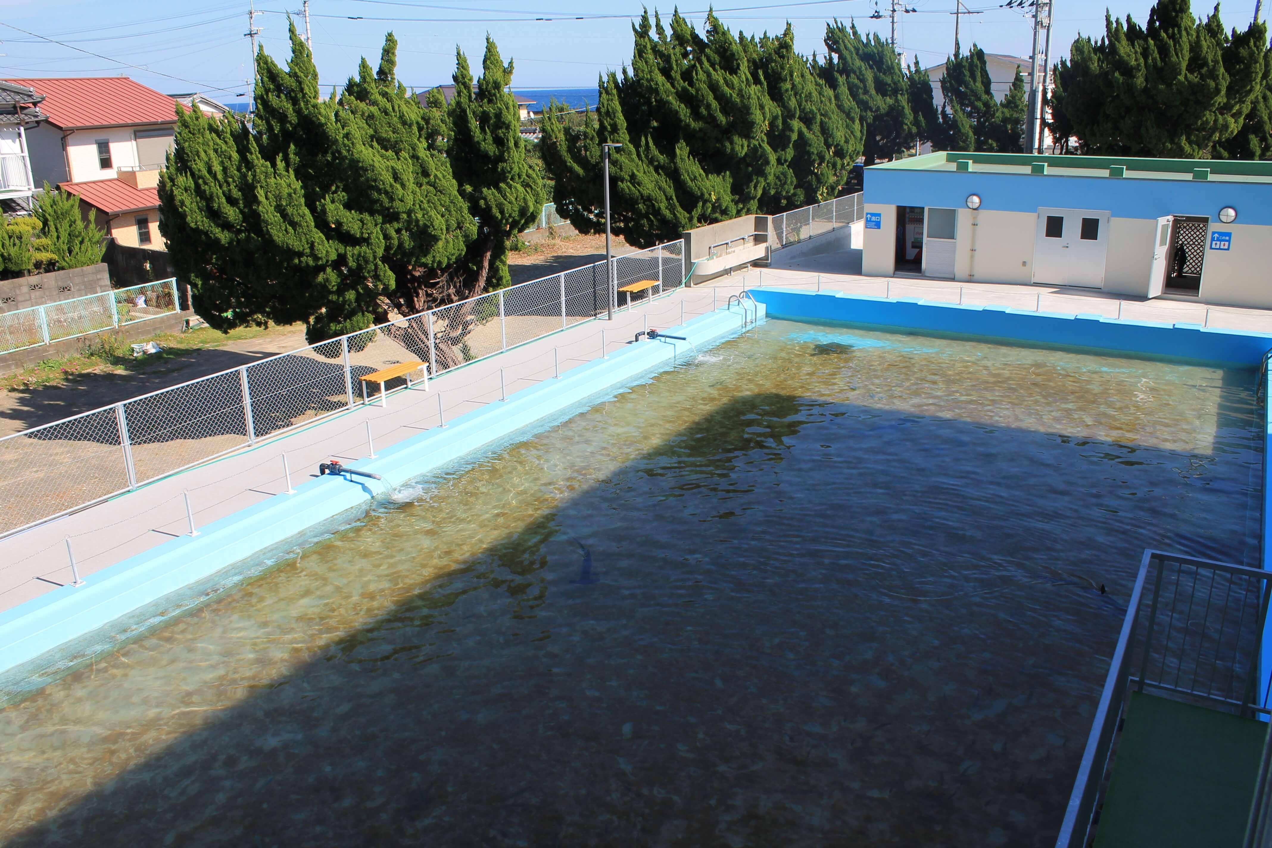 むろと廃校水族館:大プール展示