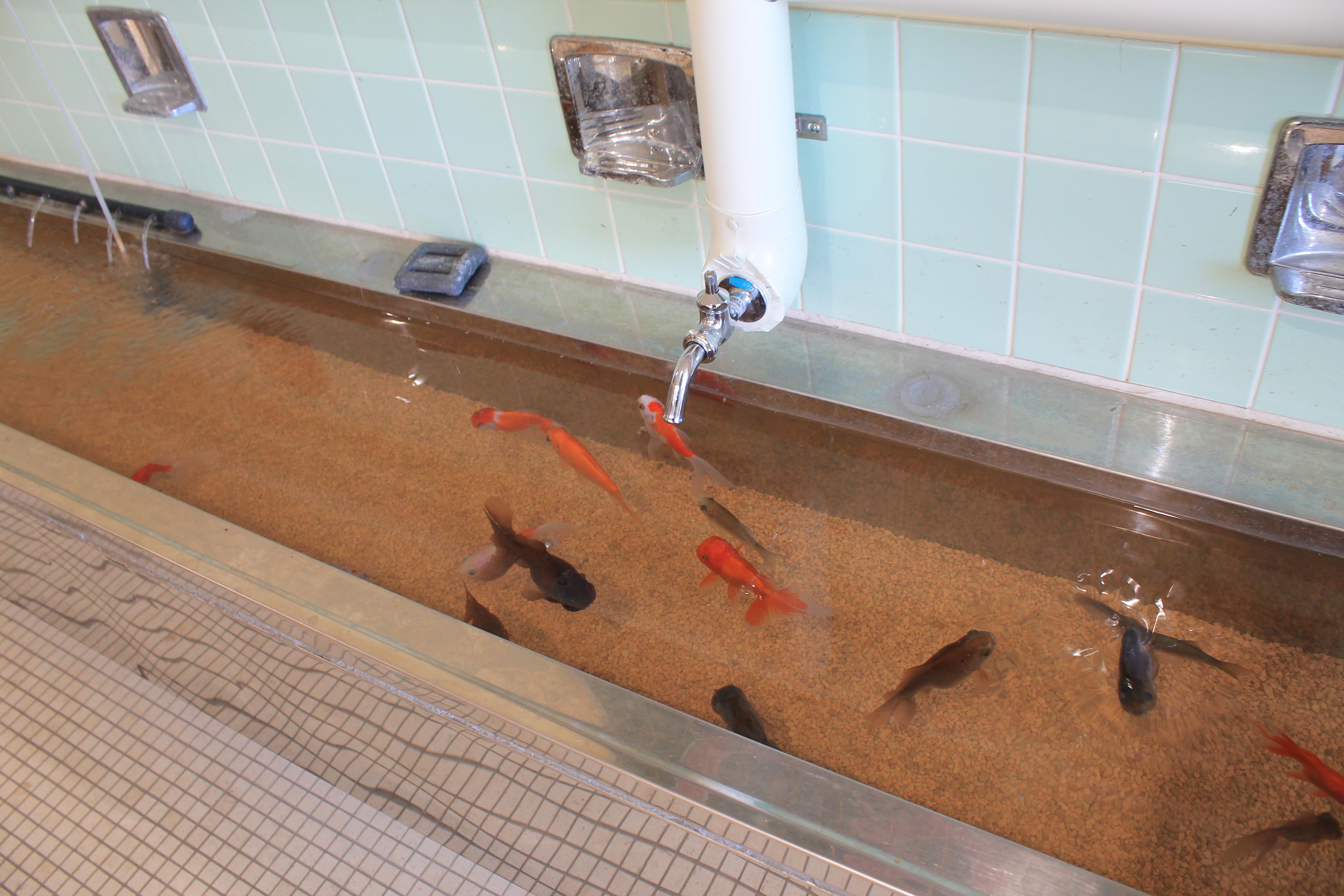 むろと廃校水族館:水道の展示