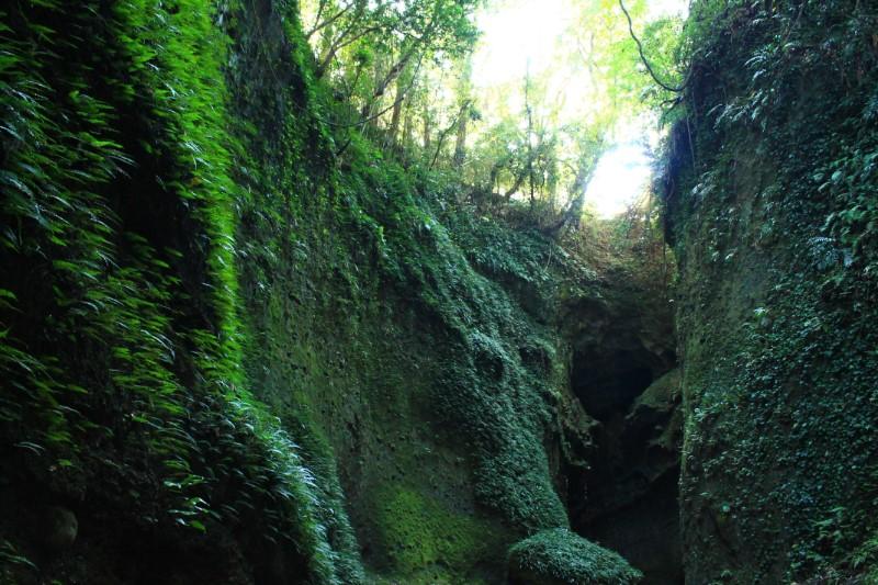 高知の絶景:伊尾木洞