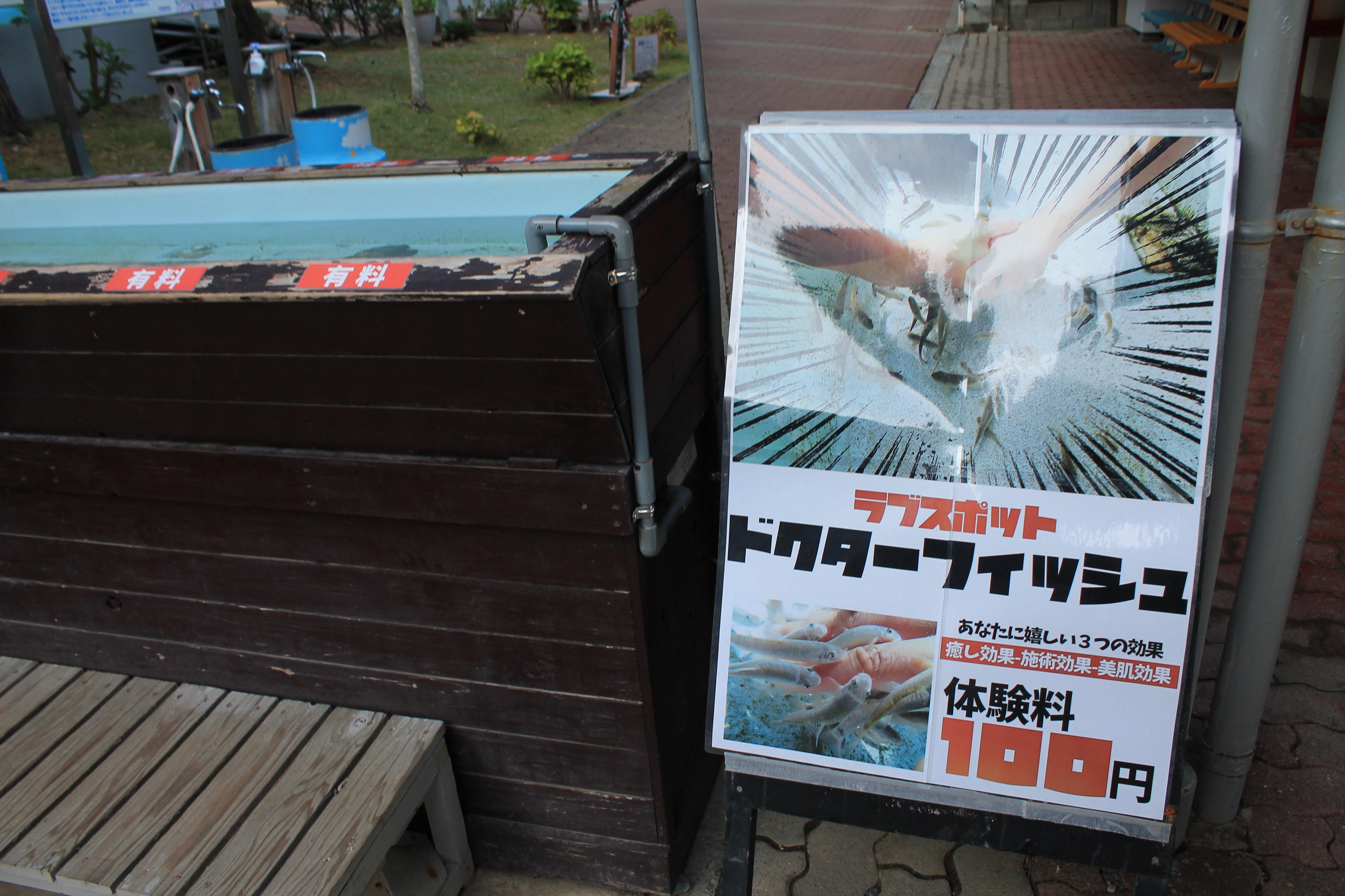 桂浜水族館:ドクターフィッシュ