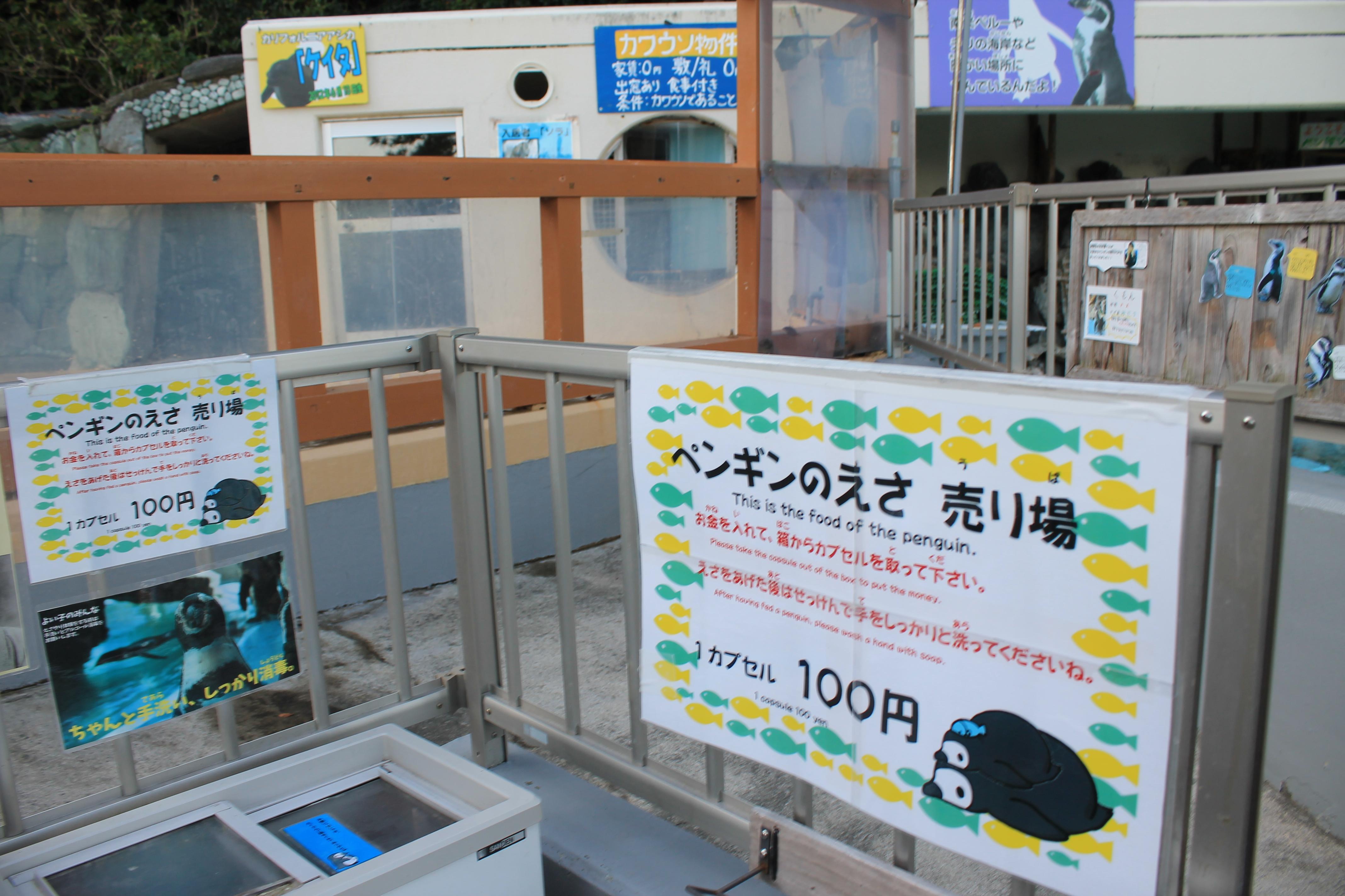 桂浜水族館:ぺんぎんのえさやり