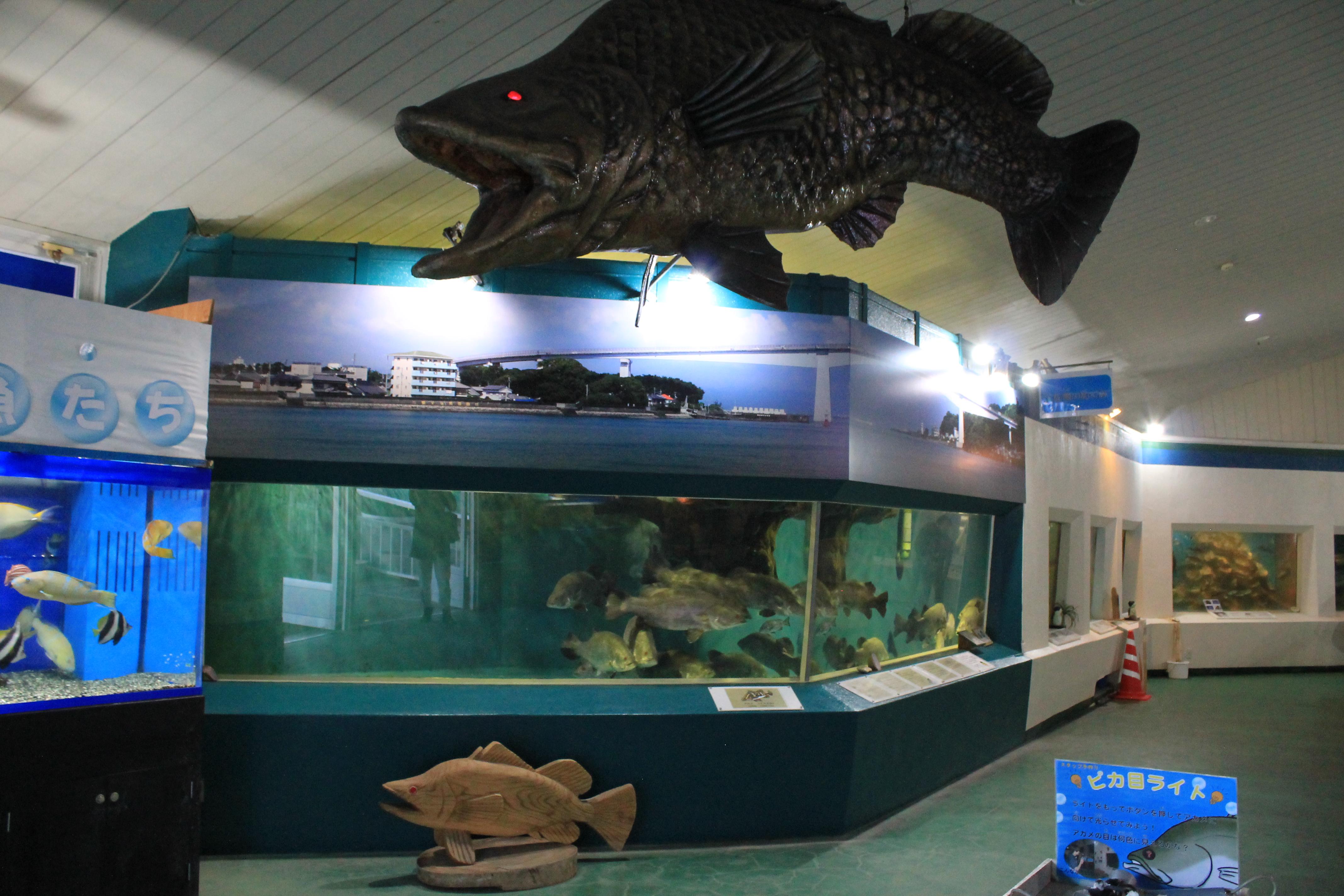 桂浜水族館:アカメ
