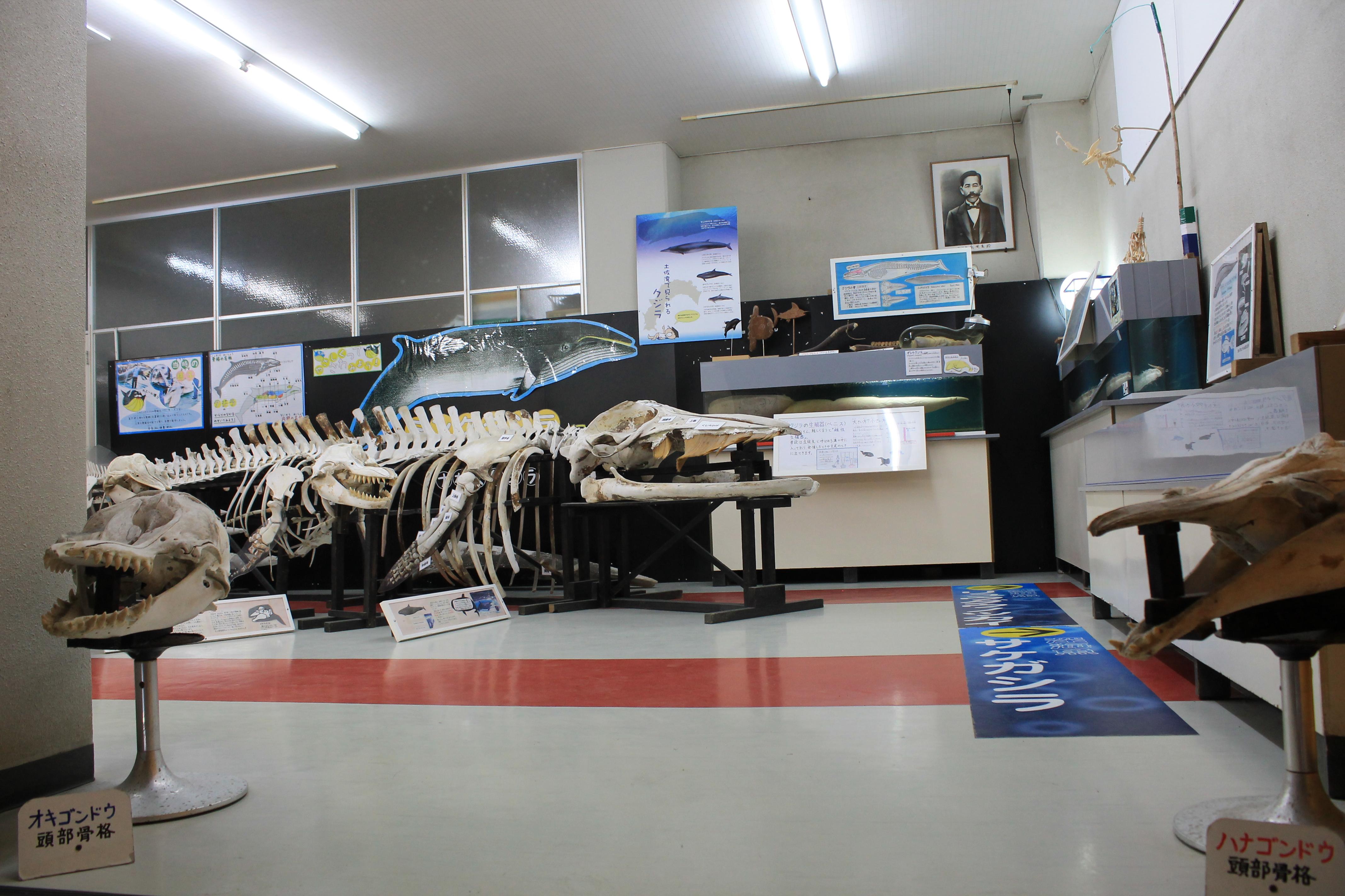 桂浜水族館:ほねほねルーム