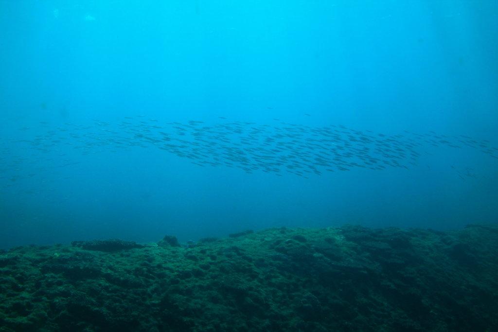 足摺海底館:外から見える魚の群れ