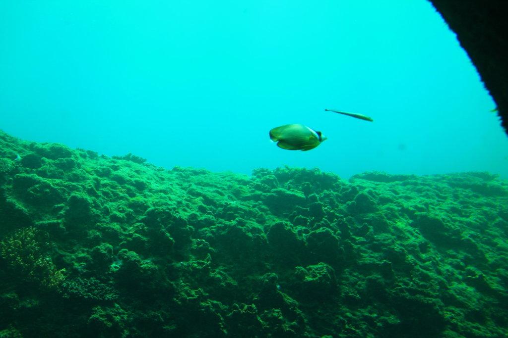 足摺海底館から見るお魚