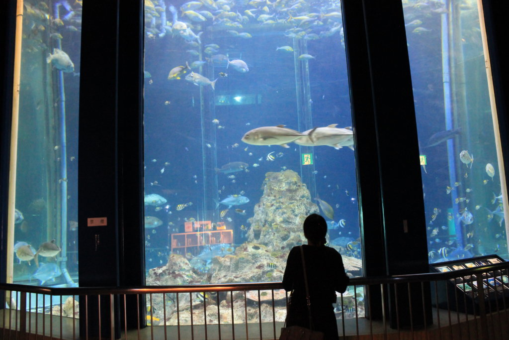 足摺海洋館の大水槽
