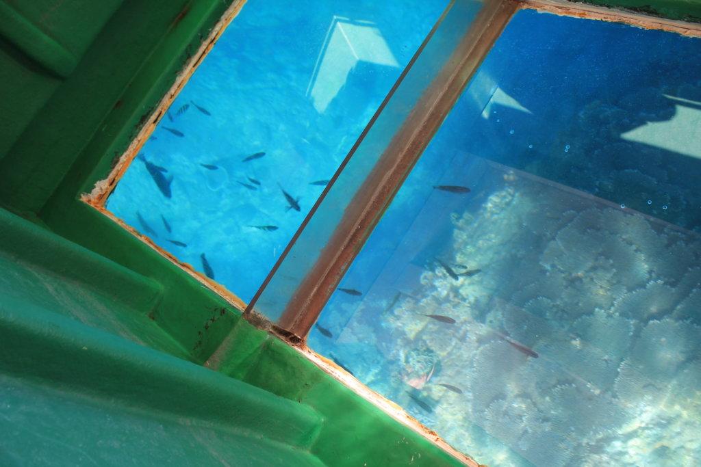 竜串グラスボートから見る海の底