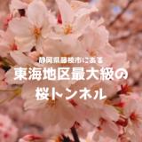 藤枝市の桜トンネルは東海地区最大級!お花見におすすめ
