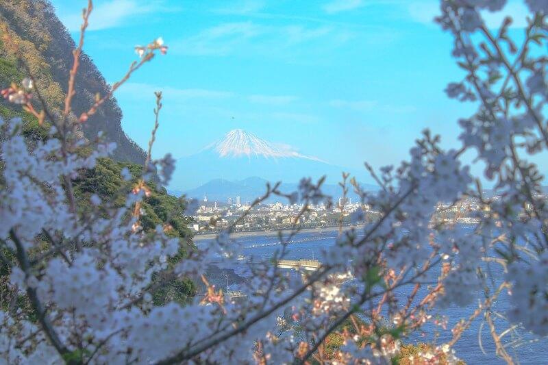 喫茶店かいざんから見える桜と富士山