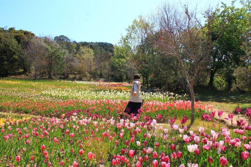 モネの庭のチューリップ畑を歩く
