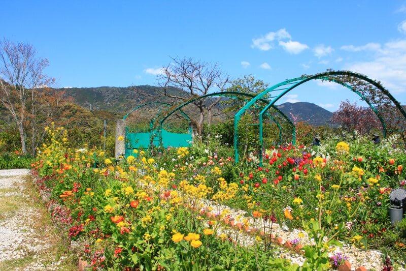 モネの庭 花の庭
