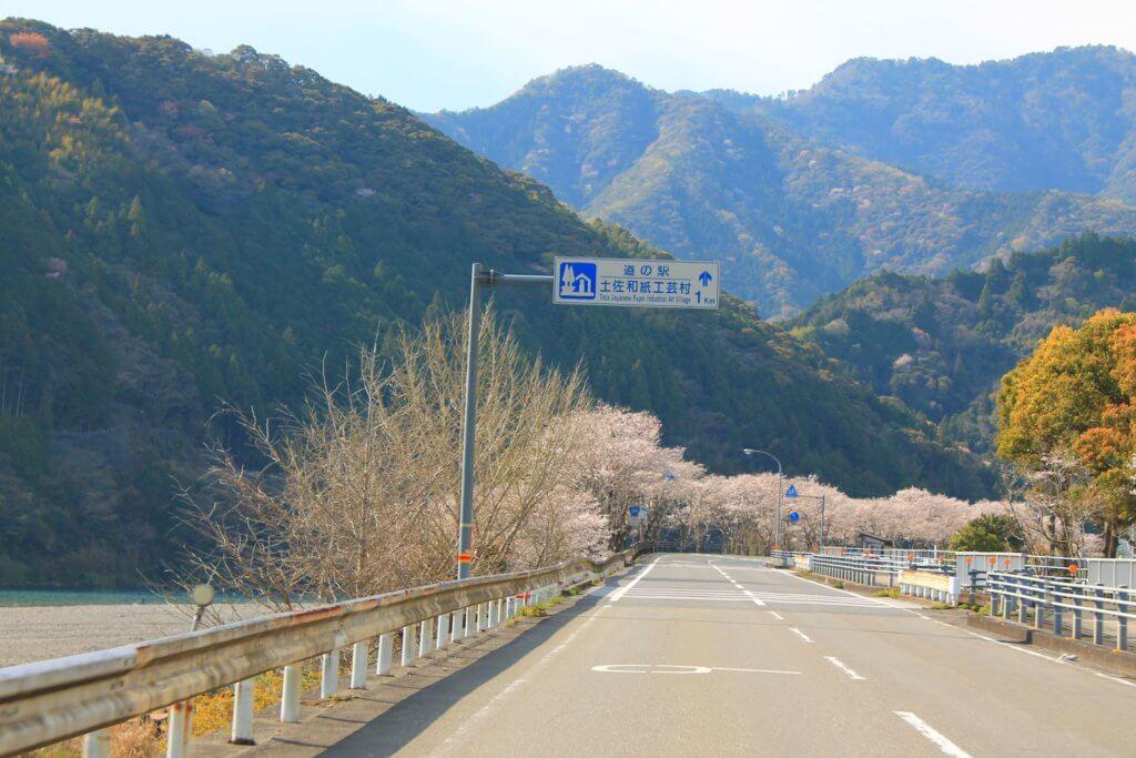 仁淀川沿いの桜並木