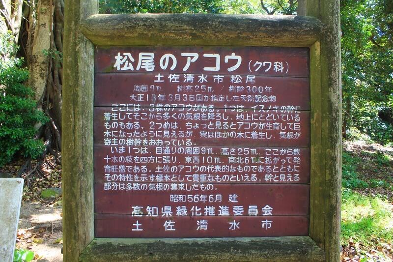 松尾のアコウの木の看板
