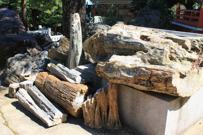 金剛福寺の珪化木
