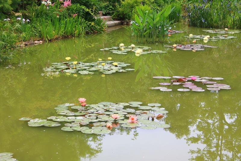花の美術館の睡蓮