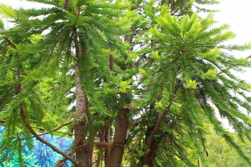 浜名湖ガーデンパークジュラシックツリー