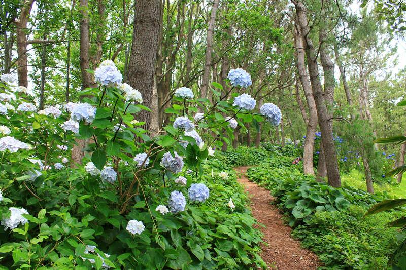 浜名湖ガーデンパーク:あじさいの小径