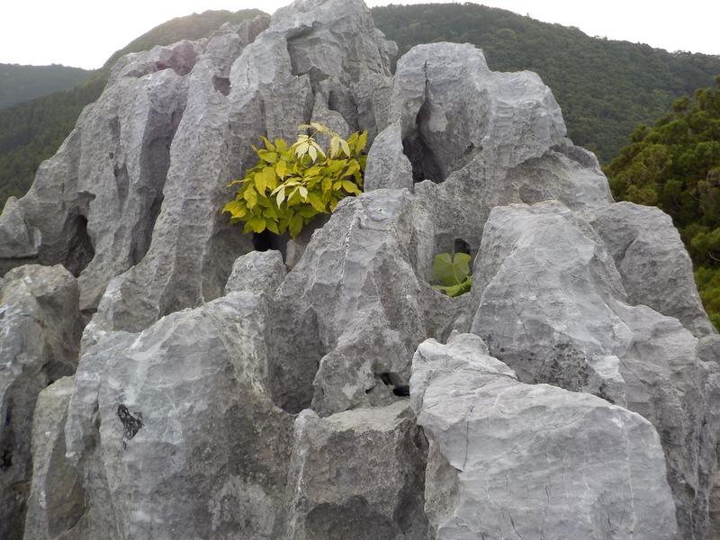立須の頂上