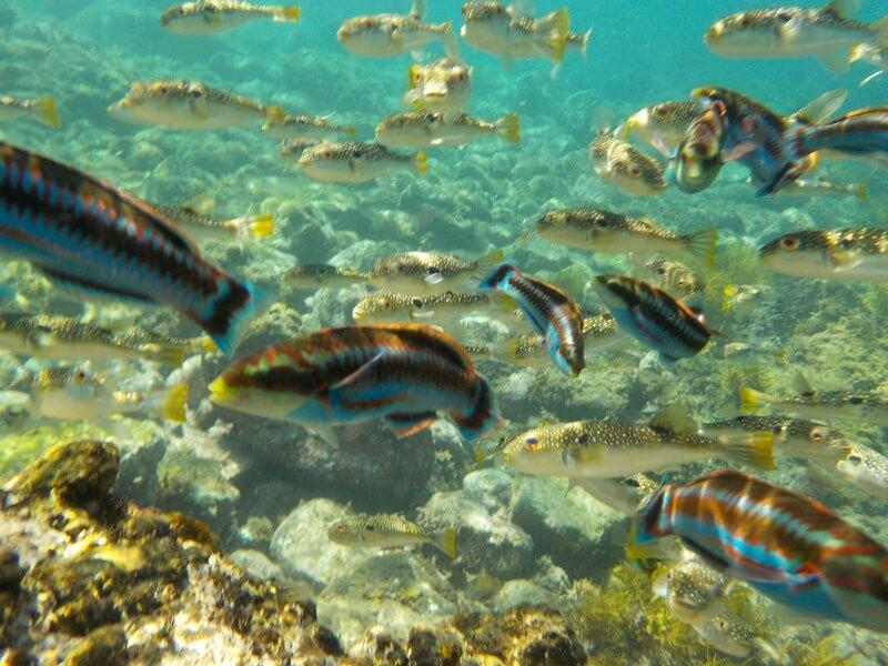 ヒリゾ浜の浅瀬(魚のえさ使用)